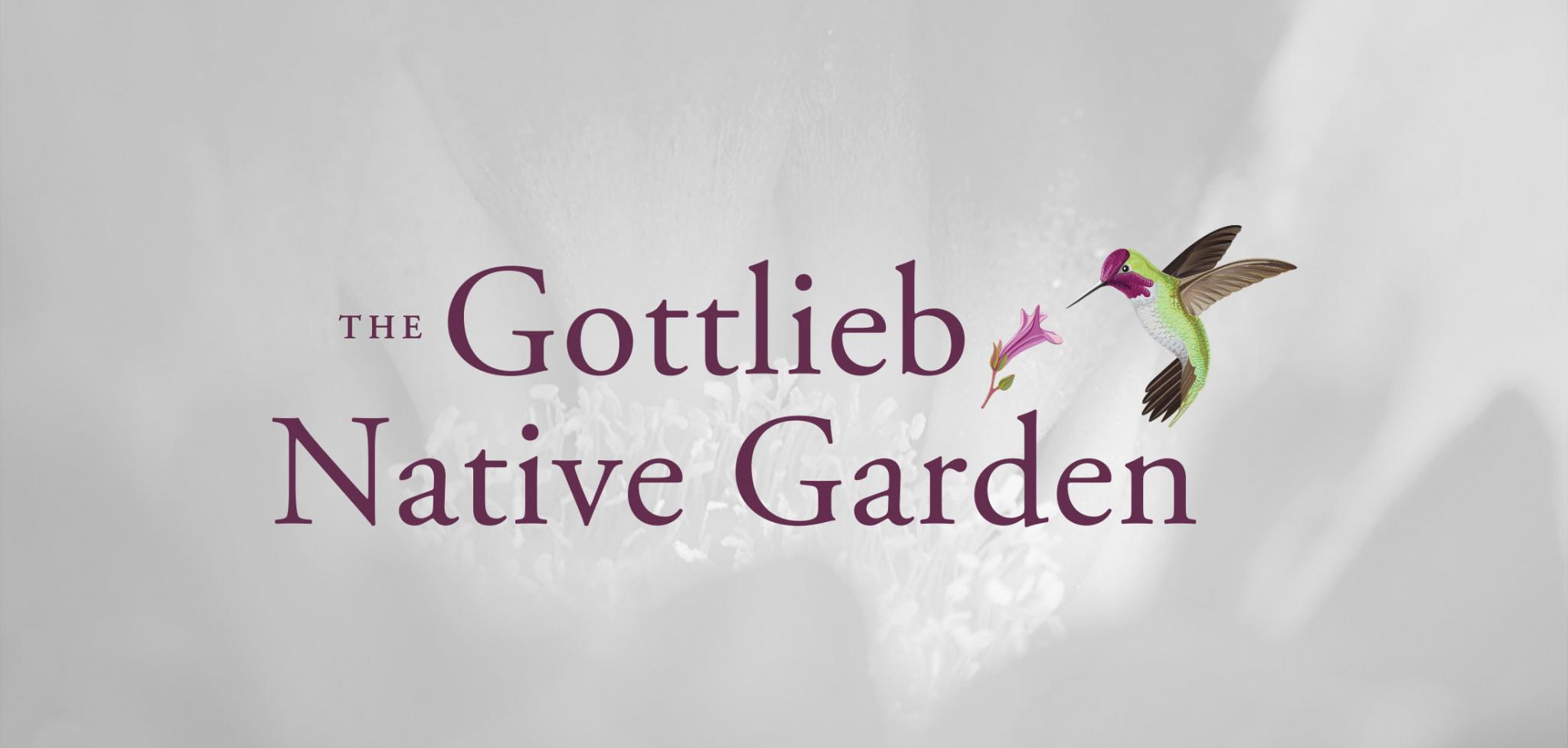 Eco Branding Logo Design for the Gottlieb Native Garden
