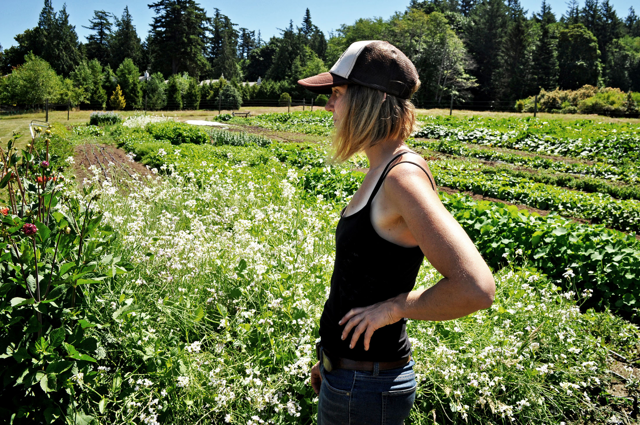 Loganita Farm, Lummi Island, Washington - Environmental Storytelling